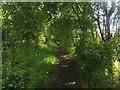 NZ1781 : Public bridleway, Stannington Park by Graham Robson