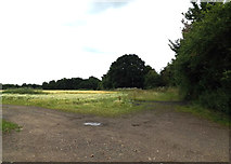 TL2012 : Field off Cromer Hyde Lane by Adrian Cable