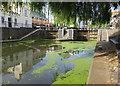 TQ2884 : Regent's Canal at Camden by Paul Harrop