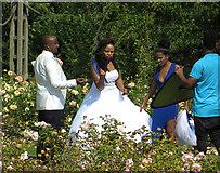 TQ2882 : Wedding photos. Regent's Park by Paul Harrop