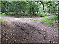 SU9586 : Permissive path at T-junction to public footpath in Egypt Woods by David Hawgood