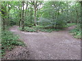 SU9485 : Junction of public and permissive paths in Dorney Wood by David Hawgood