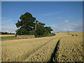 TL3454 : Woodland strip by Hugh Venables