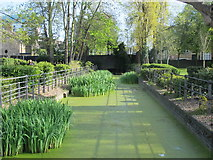 TQ3296 : The New River in front of Enfield Civic Centre, Silver Street, EN1 (5) by Mike Quinn