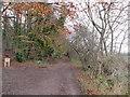 SE9232 : Little  Wold  Plantation by Martin Dawes