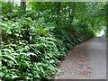 SK0646 : Ferny retaining wall by Ian Calderwood