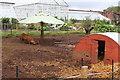 ST0972 : Porkers under a parasol, Dyffryn Gardens! by M J Roscoe