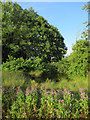 TL3054 : Small pond near Longstowe by Hugh Venables