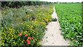 TF7104 : Crop field by Evelyn Simak