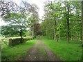 NY7162 : Track through Sunny Plantation by Graham Robson