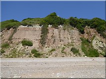 SY2589 : Strata in Haven Cliff by David Smith