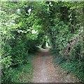 TQ6762 : Pilgrims Way, near Birling by Chris Whippet