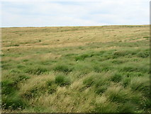 SD9617 : Moorland North of the Roman Road by John H Darch