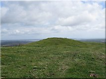 SY9282 : Tumulus on Stonehill Down by Becky Williamson