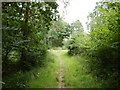 TQ1561 : Prince's Coverts - Path Junction in The Heckets by James Emmans