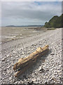 SD4476 : Driftwood, Far Arnside by Karl and Ali