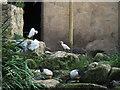 SE4536 : Lotherton bird garden: egrets etcetera by Stephen Craven