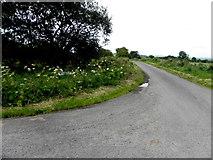H5559 : Garvaghy Road, Garvaghy by Kenneth  Allen