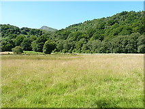 SH7357 : A meadow beside the Llugwy by Richard Law