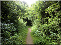 NY3858 : Path behind Kingstown Industrial Estate by David Dixon