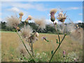 SE2336 : Thistledown at Rodley nature reserve by Stephen Craven