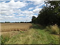TM0572 : Nan Hazle's Lane footpath by Adrian Cable
