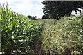 SJ5364 : The Sandstone Trail at Fishersgreen Farm by Jeff Buck