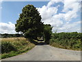 TM0076 : Wood Lane, Thelnetham by Geographer