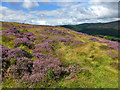 NT4129 : Heather hillside by Walter Baxter