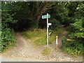 TQ4363 : Footpath and bridleway into the woods near Downe by Malc McDonald