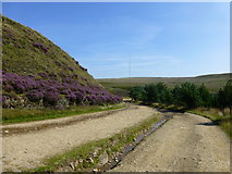 SD6413 : Heather clad Brown Hill on Belmont Road by Raymond Knapman