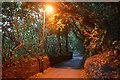 SX8850 : Kingswear : Castle Road by Lewis Clarke