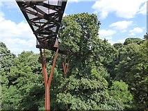 TQ1876 : The treetop walkway, Kew Gardens by David Smith