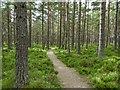 NJ0020 : Path Dell Woods by valenta