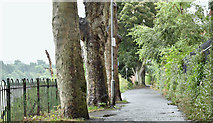 J3371 : The Lagan towpath, Stranmillis, Belfast (August 2016) by Albert Bridge