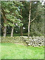 SD7167 : Stile on a footpath that crosses a plantation, Clapham by Humphrey Bolton