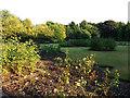 SE2928 : End of summer in Middleton Park rose garden by Stephen Craven