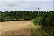 TQ6761 : Footpath heading towards Holly Hill by Chris Heaton