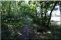 SE3006 : Penistone Rail Trail towards Dodworth by Ian S