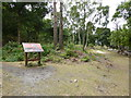 SZ0188 : The remains of Maryland village, Brownsea Island by Chris Allen