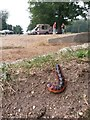 SU1608 : Rockford: large caterpillar at Moyles Court by Chris Downer