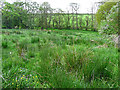 NY4552 : Meadow, Quarry Banks Nature Reserve by Rose and Trev Clough