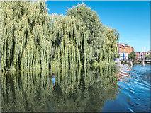 TL3514 : River Lea near Ware, Hertfordshire by Christine Matthews