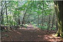 SJ5371 : Delamere Forest by Jeff Buck