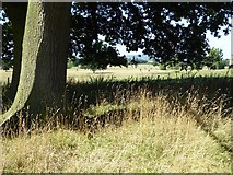 SO8844 : Shade in Croome Park by Philip Halling