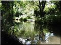 TQ4871 : The River Cray at Foots Cray Meadows by Marathon