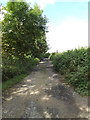 TM0669 : Footpath off the B1113 Walsham Road by Adrian Cable