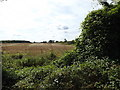 TL9670 : Looking towards Stowlangtoft Water Tower by Adrian Cable