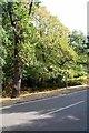 TQ3664 : London Loop Leaves Shirley Church Rd by Glyn Baker