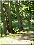 SO8843 : Trees beside Croome River by Philip Halling